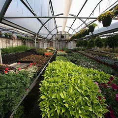 Inside the Wholesale Greenhouse
